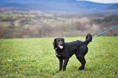 Schützen Sie Hund Lizenzfreie Stockfotos