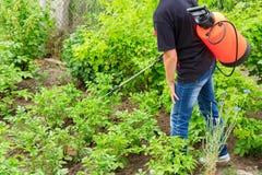 Schützende Kartoffelpflanzen von der Pilzinfektion oder von den Schädlingen mit PR stockfotos