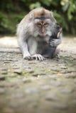 Schützende Mutter schützt ihr Baby im Affe-Wald Lizenzfreie Stockbilder