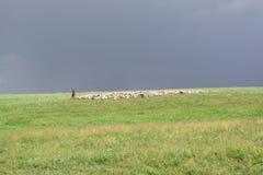 Sch?fer With Sheep Menge lassen auf dem H?gel weiden Gr?ner H?gel Slight Unsch?rfe im Seitentrieb, um Bewegung zu zeigen lizenzfreie stockbilder