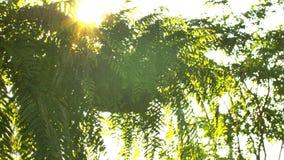Sch?n aus Fokussonnenuntergang heraus Sun-Glanz gr?ndlich der Schlag auf Windbaumbl?ttern stock footage