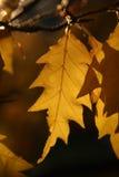 sch nbrunn листьев Стоковые Изображения