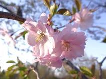 Sch?ne Blumen in der Sonne stockfotografie