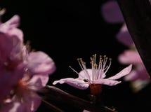 Sch?ne Blumen stockfoto