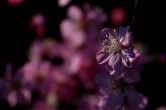 Sch?ne Blumen lizenzfreies stockfoto
