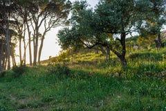 Sch?ne Gefangennahme einer Landschaft im Fr?hjahr 2019 stockfotografie
