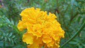 Sch?ne gelbe Blumen lizenzfreie stockfotos