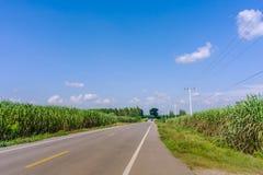 Sch?ne Landschaft des Zuckerrohrwachstums im Bauernhof nahe den Landstra?en lizenzfreie stockfotografie