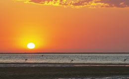 Sch?ne rote Sonnenuntergang- und Seelagune mit Flamingos lizenzfreie stockfotos