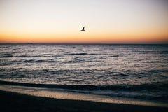 Sch?ne Seem?wen, die in rosa Himmel und in Sonnenaufgang ?ber Meereswellen auf Tropeninsel fliegen r tranquil lizenzfreies stockfoto