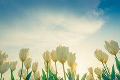 Sch?ner Blumenstrau? der Jahreszeit der Tulpen im Fr?hjahr (Gefilterter Bild verarbeiteter Weinleseeffekt lizenzfreies stockbild