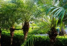 Sch?ner gr?ner Baum-, Betriebs-, Wald- und Blumenhintergrund in den G?rten im Freien stockfotos