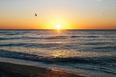 Sch?ner Sonnenaufgang und Seem?wen, die in roten Himmel ?ber Meereswellen auf Tropeninsel fliegen r tranquil stockfoto