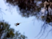 Sch?nes Bild, in dem Sie eine Spinne sehen k?nnen, durch die Mitte des Bildes in einem horizontalen Faden zu gehen, der es h?lt lizenzfreie stockfotos