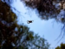Sch?nes Bild, in dem Sie eine Spinne sehen k?nnen, durch die Mitte des Bildes in einem horizontalen Faden zu gehen, der es h?lt lizenzfreie stockbilder