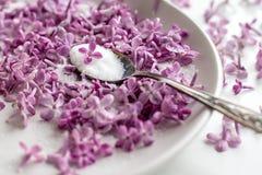 Sch?nes neues purpurrotes lila blossomsHomemade Vorbereiten des lila Zuckers mit ?berraschendem Duft stockfotografie