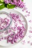 Sch?nes neues purpurrotes lila blossomsHomemade Vorbereiten des lila Zuckers mit ?berraschendem Duft lizenzfreie stockbilder