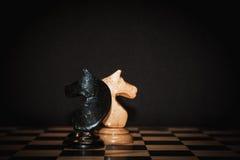 Schaakpaard royalty-vrije stock afbeelding