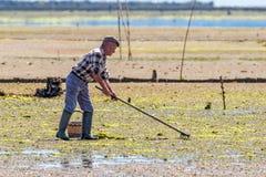 Schaaldieren die op Ria Formosa, Algarve, Portugal oogsten stock foto