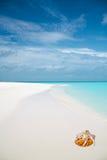 Schaaldieren op tropisch zandig strand Stock Foto's
