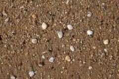 Schaaldieren op zand Royalty-vrije Stock Foto