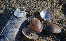 Schaaldieren over de droge kust stock foto's