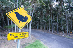 Schaapvogels - Lord Howe Island stock afbeelding