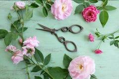 Schaar en roze rozen royalty-vrije stock afbeeldingen