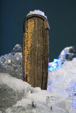 Schaars boek op bevroren ijs in studio royalty-vrije stock fotografie