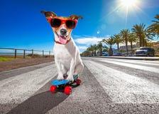 Schaatserhond op skateboard stock fotografie