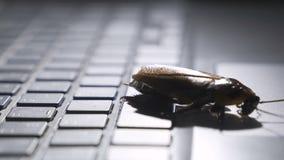 Schabe, die auf Tastatur klettert, um sich über den Computer darzustellen in Angriff genommen vom Virus stock video