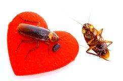 Schaben mit rotem Herd, lösen in das Liebeskonzept, abgereist geliebt Stockfotografie