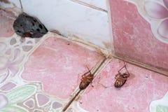 Schaben sterben wegen der Insektenvertilgungsmittel lizenzfreie stockfotos