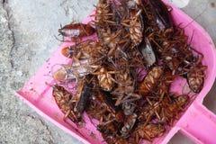 Schaben sterben wegen der Insektenvertilgungsmittel lizenzfreie stockfotografie