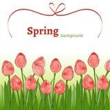 Schablone mit Frühling blüht (Tulpen) mit Aquarellbeschaffenheit auf einem weißen Hintergrund Lizenzfreie Stockbilder