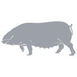 Schablonenschweingrau Stockfotos