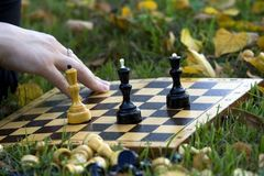 Schach auf dem Gras durch die Blätter Lizenzfreie Stockfotos