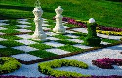 Schach der Chrysanthemen Lizenzfreies Stockfoto