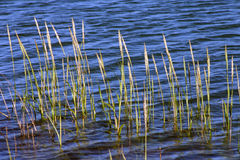 Schacht-Gras Stockbild