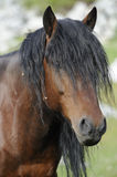 Schacht Stallion Stockfoto