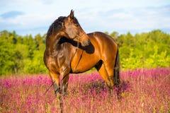 Schachtpferdenportrait in den rosafarbenen Blumen Lizenzfreie Stockfotografie