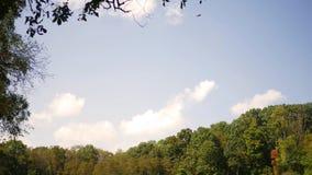 Schackningsperiod för nedgång Forest Series - Tid av moln som passerar över en grässlätt arkivfilmer