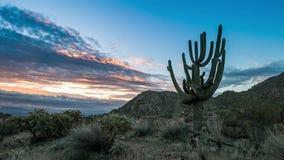 Schackningsperiod för tid för ottaArizona soluppgång med Saguarokaktuns