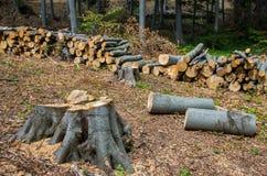 Schade aan aard Houtlogboeken in een stapel voor verwijdering van boseuropa worden gestapeld dat royalty-vrije stock foto