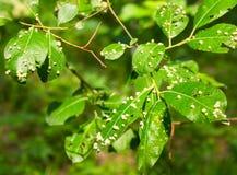 Schadelijke tuininsecten Royalty-vrije Stock Foto