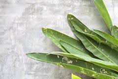 Schadengrünblätter auf der Zementwand Lizenzfreie Stockfotografie