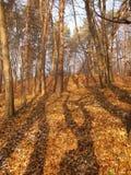 Schaduw in het bos Royalty-vrije Stock Afbeelding