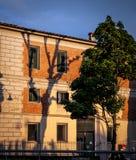 Schaduw van boom op een muur stock foto's