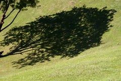 Schaduw van boom op groen gras, Villahermosa, Tabascosaus, Mexico Stock Foto's