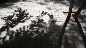 Schaduw van de bladeren stock footage